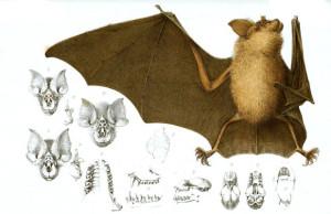 Bat Night - Parco Nazionale dello Stelvio