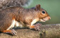 Bio invaders Parco Nazionale dello Stelvio