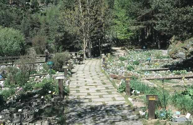 Solstizio d 39 estate al giardino botanico alpino rezia il blog di bormio bormio news - Il giardino d estate ...