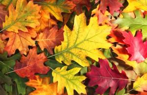 autunno a Bormio