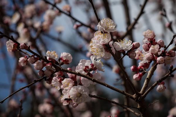 Primavera a Bormio